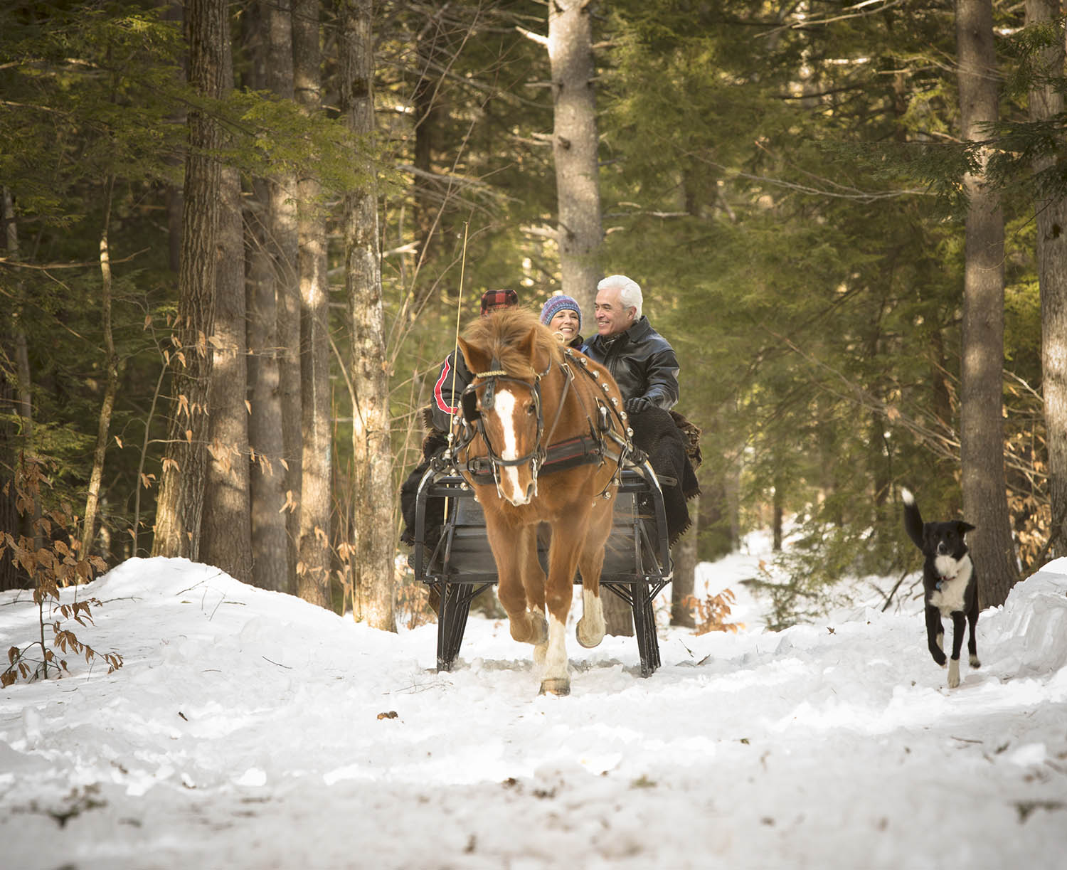 Horse drawn carriage with two people riding throught a snowy forest