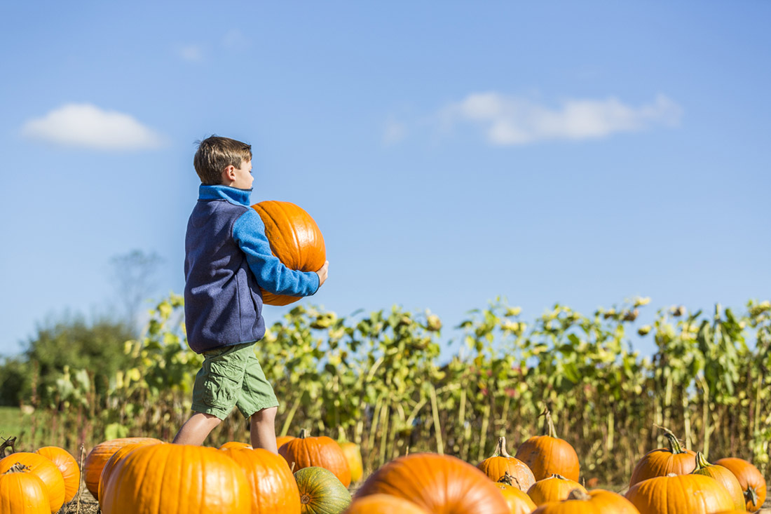 boy carrying pumpkin in pumpkin patch
