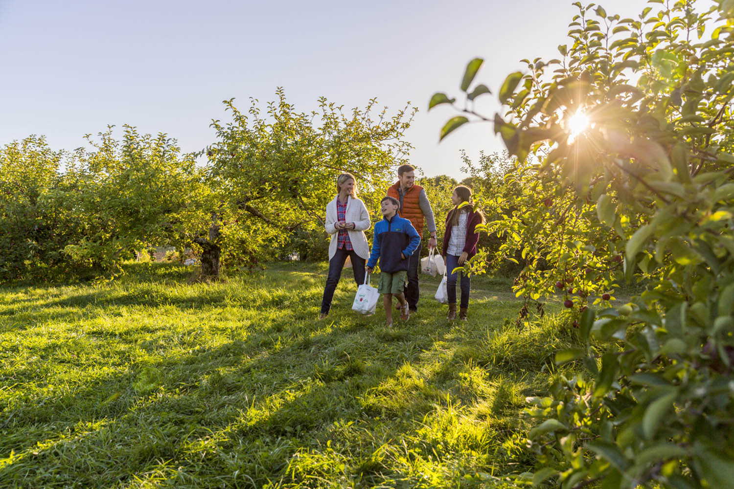 Family in apple orchard carrying bags of apples