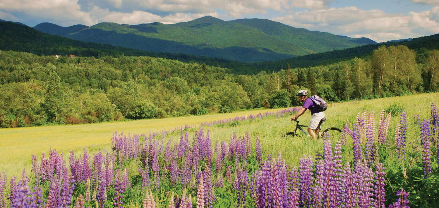 Person riding mountain bike in lupine field