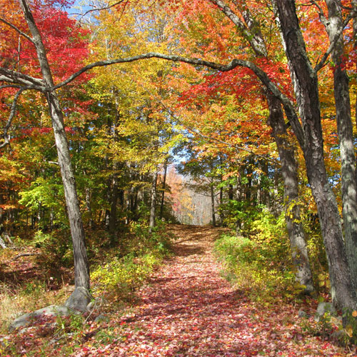 New Hampshire Fall Colors Best Time 2020 Visit NH : Foliage Tracker